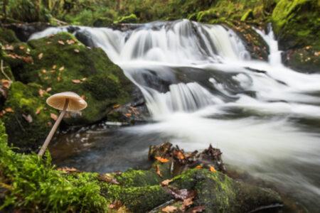 Mushroom River Ben Porter